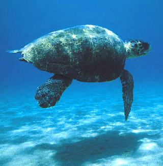Il mare delle egadi tra pesca sostenibile e archeologia for Vasche per tartarughe marine