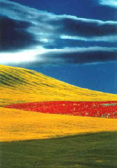 Franco Fontana Full Color